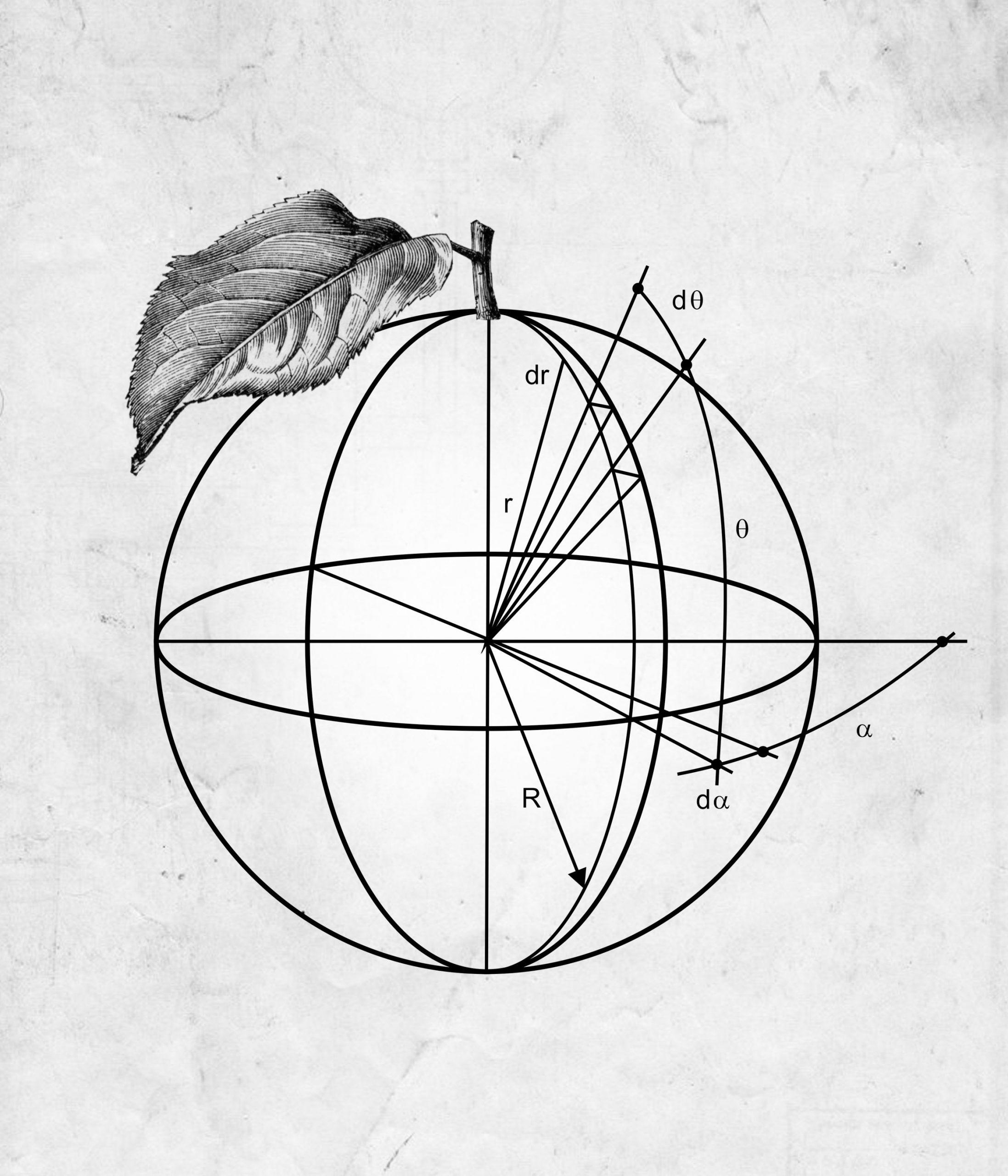 Jabłko 1